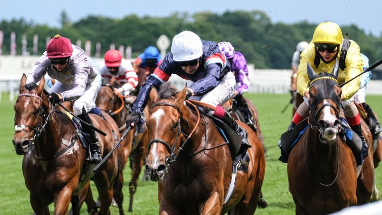 Sir Busker (blue with white cap) wins the Royal Hunt Cup at Royal Ascot last year