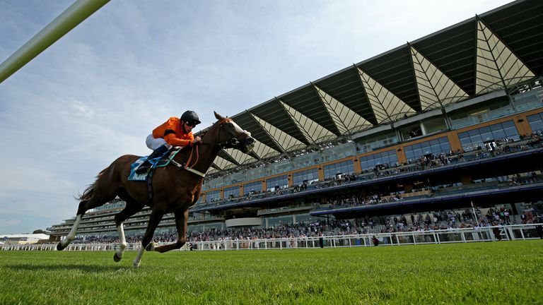 Speedo Boy could return to Ascot after winning at the track last month