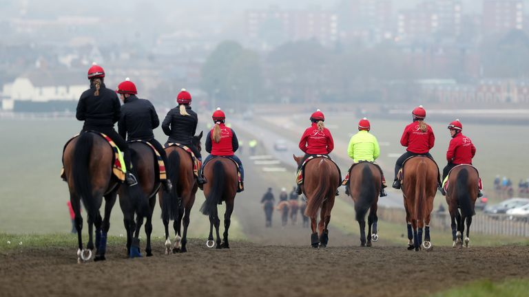 Horses head out onto the Newmarket gallops