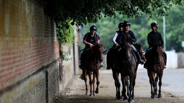 Four riders head out for a morning's work in Newmarket