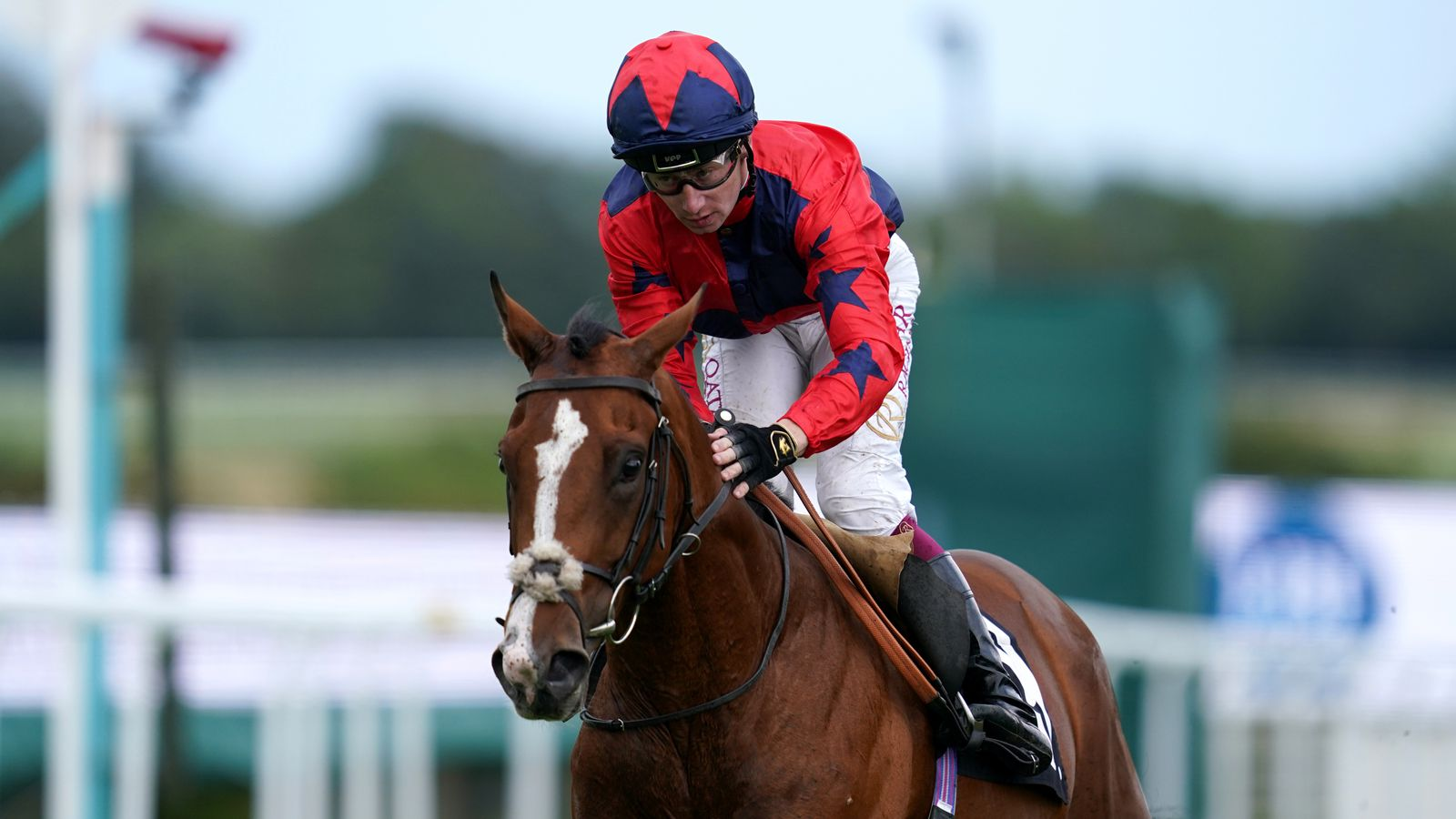 Andrew Balding expecting 'very competitive' run from Imperial Fighter in Vertem Futurity Trophy